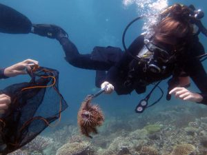 MCP Volunteer diver removing a COT