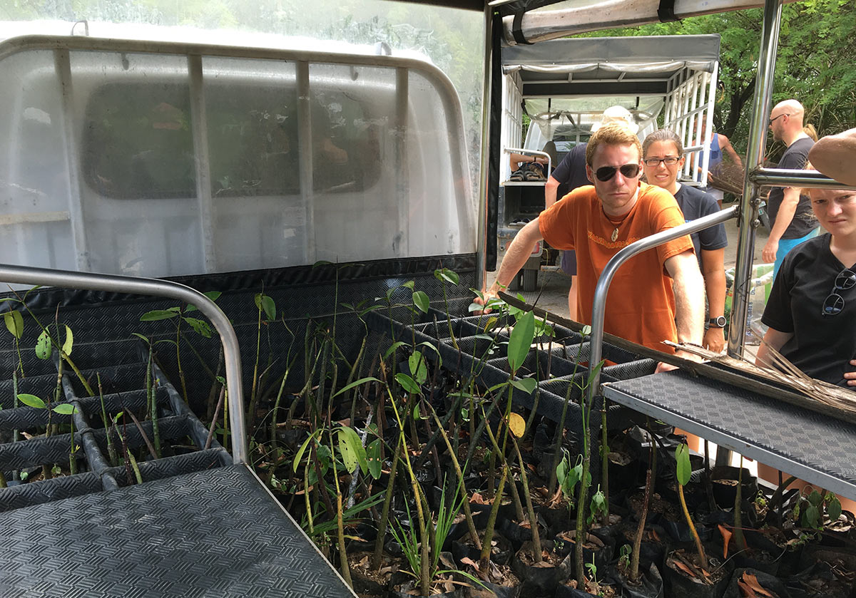 Mangrove seedlings in MCP truck